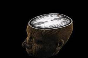 Physical architecture of intelligence in brain 'mapped'