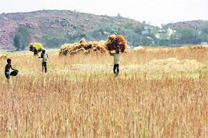 Now,airstrips,stadiums to double up asgranary
