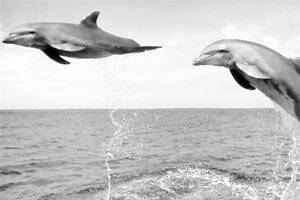 Now,a device to communicate with dolphins