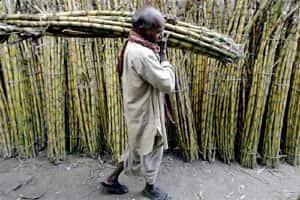 CCEA hikes sugarcane price17%