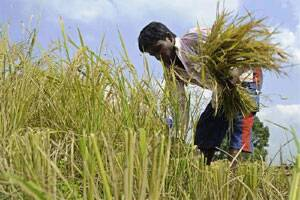 Monsoon deficit likely to impact kharif output,prices: RBI