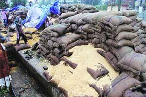Over 1,300 MT of FCI wheat faces rain fury at Vadodara railwayyard