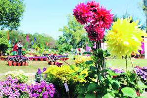 With 961 entries on day 1,MC flower show is a hit