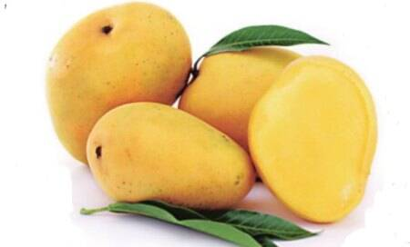 Mangoes are good for health,but don't eat too many