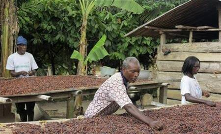Cocoa capable of combating diabetes