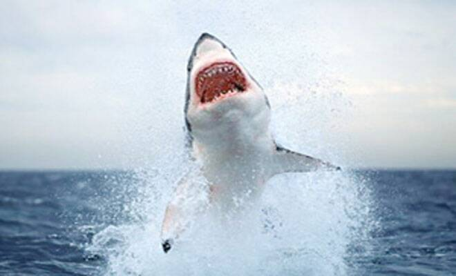 New species of shark discovered inUS