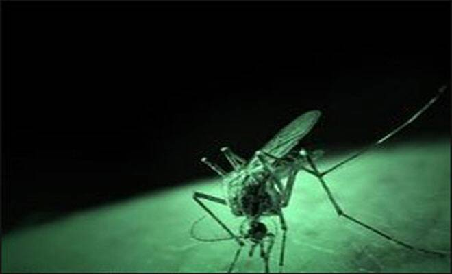 Potential vaccine for dengue discovered by researchers inSingapore