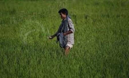 Era of 'Cheap rice' from Asia to come to an end: British think-tank