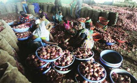 Cong,NCP at loggerheads over onion price rise