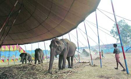 Advisory body seeks ban on all circus animals