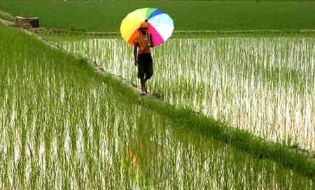 PMEAC pegs farm growth at 4.8pc in FY'14 on goodmonsoon