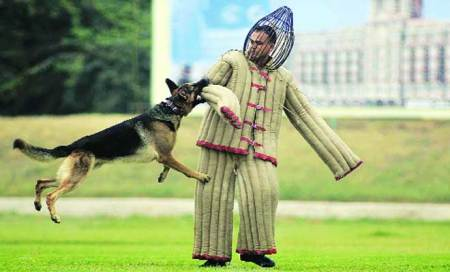 To minimise casualties,RAF planning to use dogs duringriots,protests