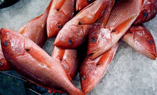 Fishy Business: Warmer oceans could raise mercury levels in fish
