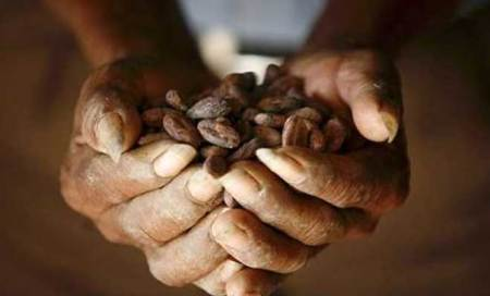 Cocoa may reverse memorydecline