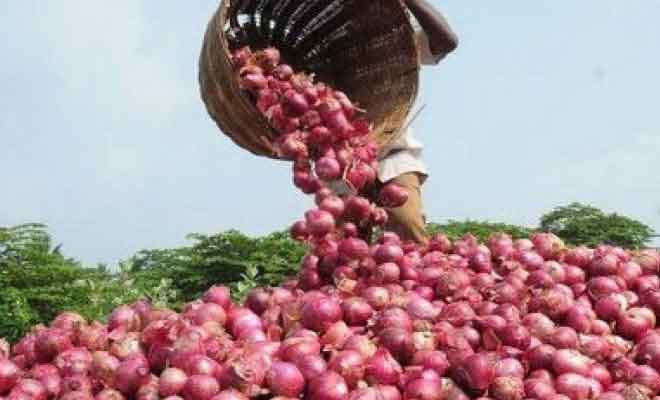 M_Id_431877_Onion_price