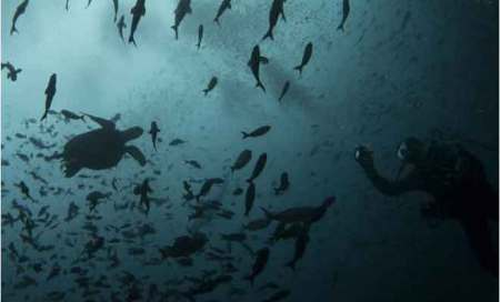 Pacific ocean warming 15 times faster than in 10,000years