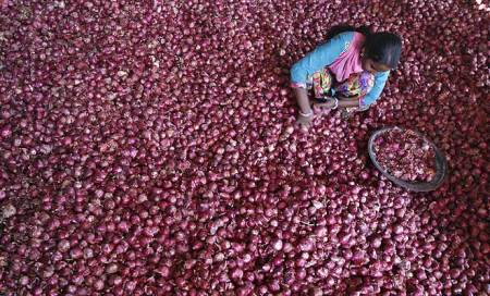 Onion prices could go up again: Survey