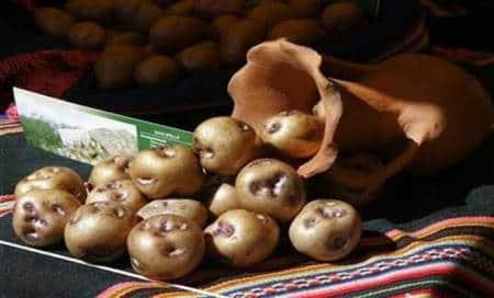 Potato prices rise as traders supply it toMP,Chhattisgarh
