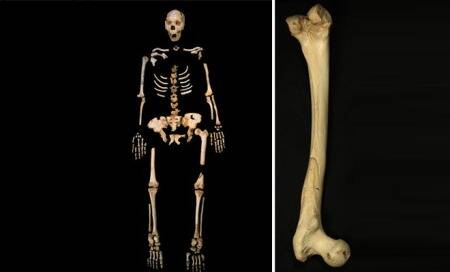 400,000-year-old DNA from human relative sets agerecord