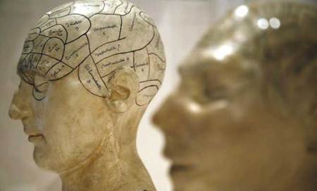Brain development is 'choreographed': study