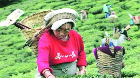 Trade unions to intensify minimum wage campaign for tea workers