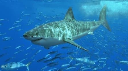 Sharks-eye-view: Underwater world captured by new camerafootage