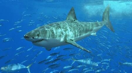 Sharks-eye-view: Underwater world captured by new camera footage