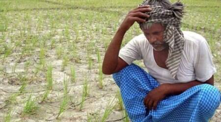 Farmers' suicide cases rise 26 percent to 1,109 in 2014