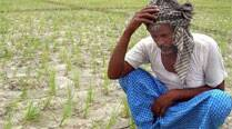 Madhya Pradesh Cong MPs Seek PM's Help for Farmers