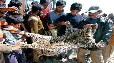 The leopard population is already under threat due to the thriving illegal trade of skins and body parts. Picture for representation