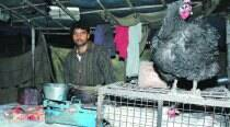 Shiv Sena shuts 500 shops selling meat products in Gurgaon