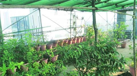 Around 120 plants of 25 varieties cover the terrace garden's 2,000 square feet of space in the school.