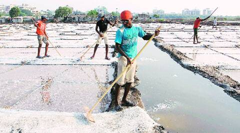 Workers at a salt pan land in Bhayander. Express Archive