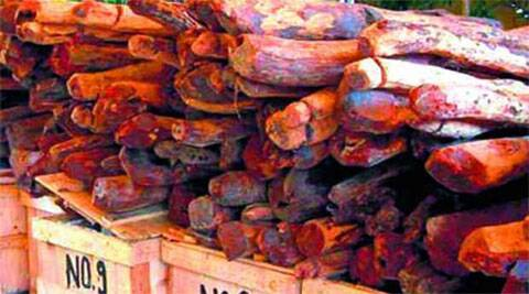 Smuggling racket busted in Bangalore, Red Sanders worth Rs 36 crore seized