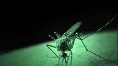 Dengue fever, an infectious tropical disease caused by a mosquito-borne virus, afflicts millions of people each year, causing fever, headache, muscle and joint pains.