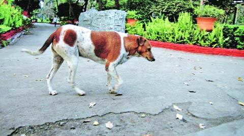 This was the first time the BMC conducted a hi-tech survey of strays dogs in the city.