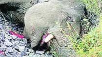 Plastic waste from Sabarimala devotees kills wild elephant in Kerala forest