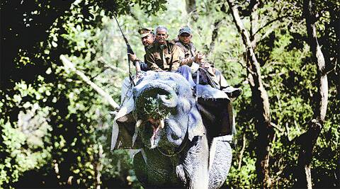 Two elephants have been brought in from Dudhwa National Park for the hunt for the 'Mysterious Queen'
