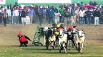 3 bulls hurt, one admitted toGADVASU