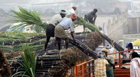 As per reports, cane dues for current season is around Rs 1,200 crore.