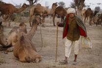 In Nagaur, it is all about camels, cattle and culture