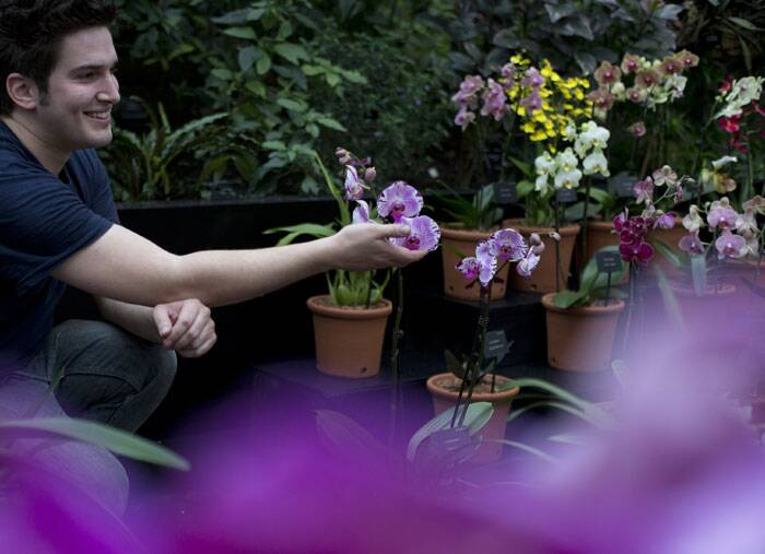 British orchid bloom provides hint of spring