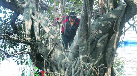 Security personnel inspect  a tree in front of Indian Museum, in Kolkata, a day ahead of PM Manmohan Singh 's visit. (IE Photo: Partha Paul)