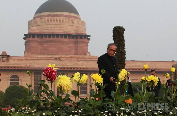 Nearly 5,000 tulips will bring the flavour of Kashmir Valley in the floral extravaganza at Rashtrapati Bhavan which will showcase 200 varieties of roses, 250 bonsai plants, 80 varieties of cactus along with flowers like Dahlia, Calendula, Gerbera, Linaria, Larkspur, Gaznia, Verbena, Viola, Pansy Carnation, Chrysanthemum, Marigold, Salvia in full bloom. (IE Photo: Renuka Puri)