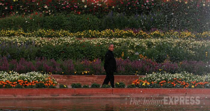 The dominant colour scheme of this year's ornamental flowers is yellow, it said. The Tulips, which have been blossoming at Tulip Garden in Kashmir, have been imported from Holland with the support of horticulture department of Jammu and Kashmir as they have the official license for importing the flowers. (IE Photo: Renuka Puri)