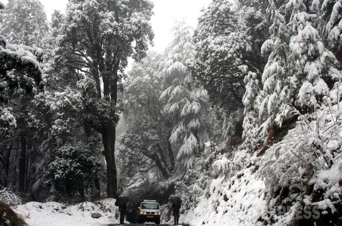 A thick blanket of snow covered the picturesque tourist resorts of Shimla and Manali in Himachal Pradesh early on Friday, making them perfect for Valentine's Day. (IE Photo: Lalit Kumar)