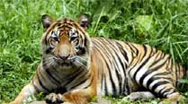 State set to get 6th tiger reserve