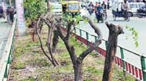 Trees chopped on the Malhar road in Ludhiana.