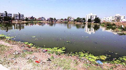 Sindhu Sagar is filled with muck, larvae and garbage. 	Bhupendra Rana
