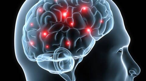 The newly discovered network triggers reactions even before the conscious brain has time to process them. (PTI)